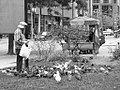 Feeding the pigeons... (51923360).jpg