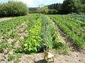 Field - panoramio - Aulo Aasmaa (1).jpg