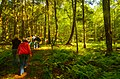 Field Trip in the Forest - Flickr - wackybadger (1).jpg