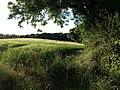 Field by Slade Lane - geograph.org.uk - 859662.jpg