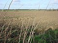 Field to the north of Borley - geograph.org.uk - 708660.jpg