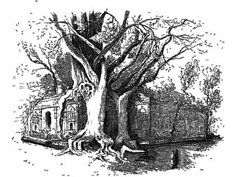 Ceylon, Physical, Historical and Topographical - Plate from Ceylon Fig Tree on the Ruins of Polonnarua. Wood engraving by Andrew Nicholl (1804 – 1886).  A combination of the exotic, the factual and the myth made Ceylon a very popular book