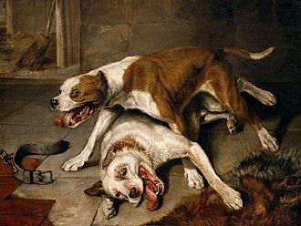 """Bull and Terrier - """"Fighting dogs"""" by Sir Edwin Henry Landseer. Circa 1839. The dog standing is probably a Bull and Terrier."""
