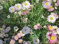 Fleurs diverses WA.jpg