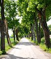Flickr - Per Ola Wiberg ~ mostly away - Avenue in early summertime.jpg