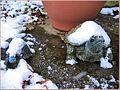 Flickr - ronsaunders47 - Frozen Tortoises. Mum and son..jpg