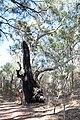 Flinders Ranges SA 5434, Australia - panoramio (74).jpg