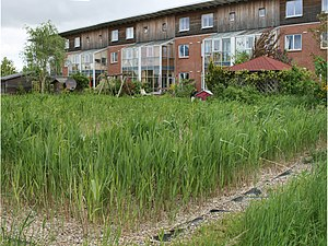 Constructed wetland - Constructed wetland in an ecological settlement in Flintenbreite near Lübeck, Germany