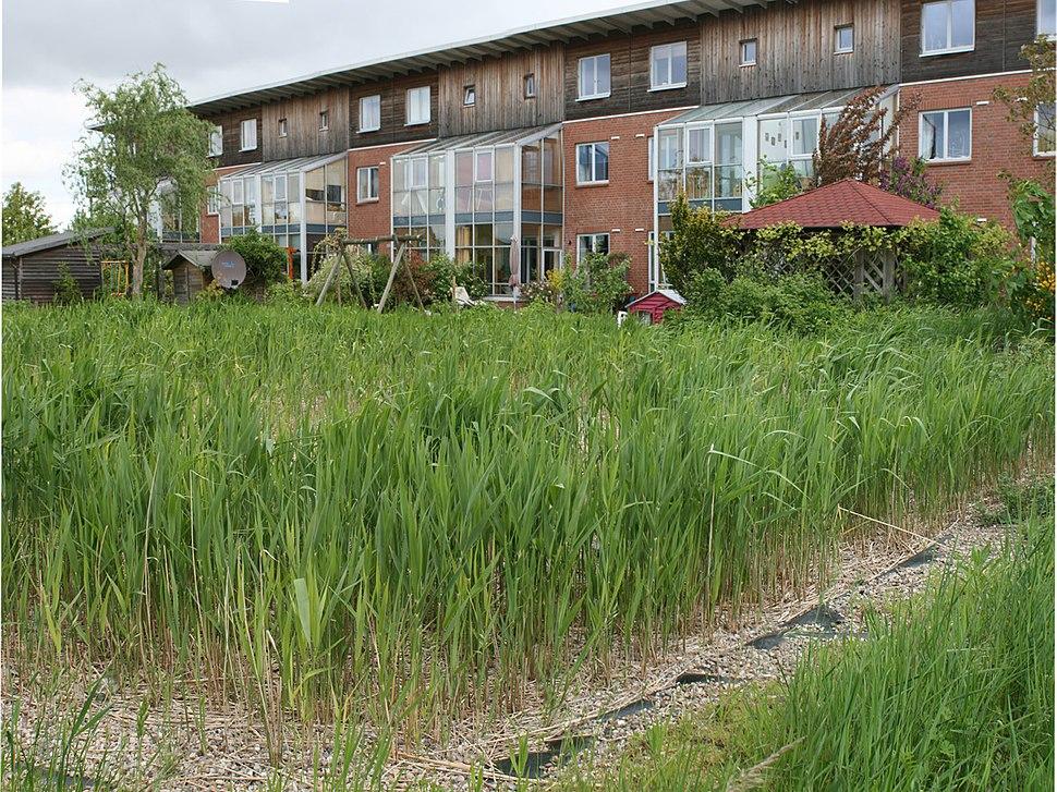 Flintenbreite constructed wetland