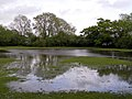 Flooded lawn south of the Lymington River, Brockenhurst, New Forest - geograph.org.uk - 172496.jpg