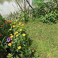 Flora Indonesia 003-MPA.jpg