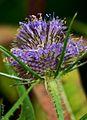 Floral 09.jpg