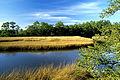 Florida salt marsh.jpg