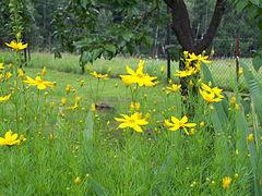 Flower 208.jpg