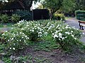 Flower Bed in Alexander Road Recreation Ground - geograph.org.uk - 944221.jpg