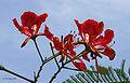 Flower I IMG 8687.jpg