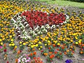Flower bed shaped heart, Central Park west, Gyömrő, Hungary.jpg