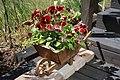 Flowers.... (2646890333).jpg