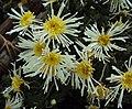 Flowers - Uncategorised Garden plants 206.JPG