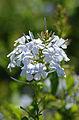 Flowers in Addo.JPG