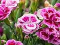 Flowers of Sweden June 2016 10.jpg