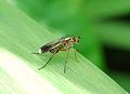 Fly (2607416303).jpg