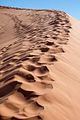 Foot prints that will soon be wiped out by the wind (8078515069).jpg