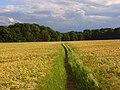 Footpath, Cookham - geograph.org.uk - 857222.jpg