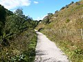 Footpath - Entering Lathkill Dale National Nature Reserve - geograph.org.uk - 569263.jpg