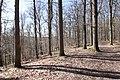 Forêt Départementale de Beauplan à Saint-Rémy-lès-Chevreuse le 14 mars 2018 - 08.jpg