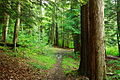 Forest-trail-trees - West Virginia - ForestWander.jpg