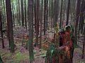 Forest - panoramio (68).jpg