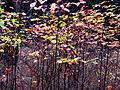 Forest Plants (3022271047).jpg