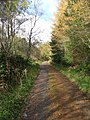 Forest road - geograph.org.uk - 1040305.jpg