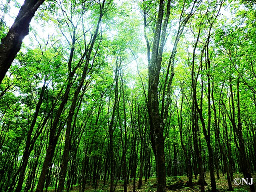 Forests invoking to be explored