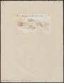 Fundulus swampinus - 1700-1880 - Print - Iconographia Zoologica - Special Collections University of Amsterdam - UBA01 IZ14800147.tif