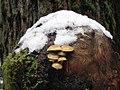 Fungi - Olympic National Forest - November 2017.jpg