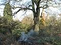 Garden bonfire near 'Cryers Oak' - geograph.org.uk - 2192277.jpg