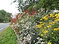 Garden on Fyfield Road, Shelley (geograph 5508426).jpg