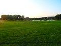 Geese in Warner Park - panoramio (12).jpg