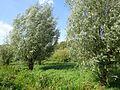 Gelderse Poort Bemmel PM16-09.jpg