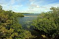 Gfp-florida-keys-key-largo-stream-and-horizon.jpg