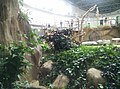 Giant Panda Conservation Centre in Zoo Negara Malaysia 2021 (26).jpg