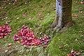 Ginkaku-ji 2007-11-20 (2100182334).jpg