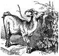 Goat Drawing.jpg