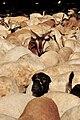 Goats and sheeps in Mecca - Flickr - Al Jazeera English.jpg