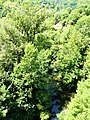 Goul Saint-Hippolyte D904 amont.jpg