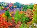 Governor Dodge State Park during Autumn - panoramio (4).jpg