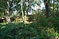Grabhügel in den Hademarscher Bergen NIK 4219.JPG
