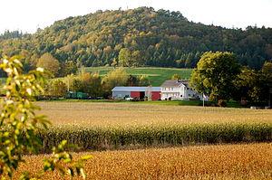 Grafton, Nova Scotia - Corn growing at Grafton beside the North Mountain, October 2011